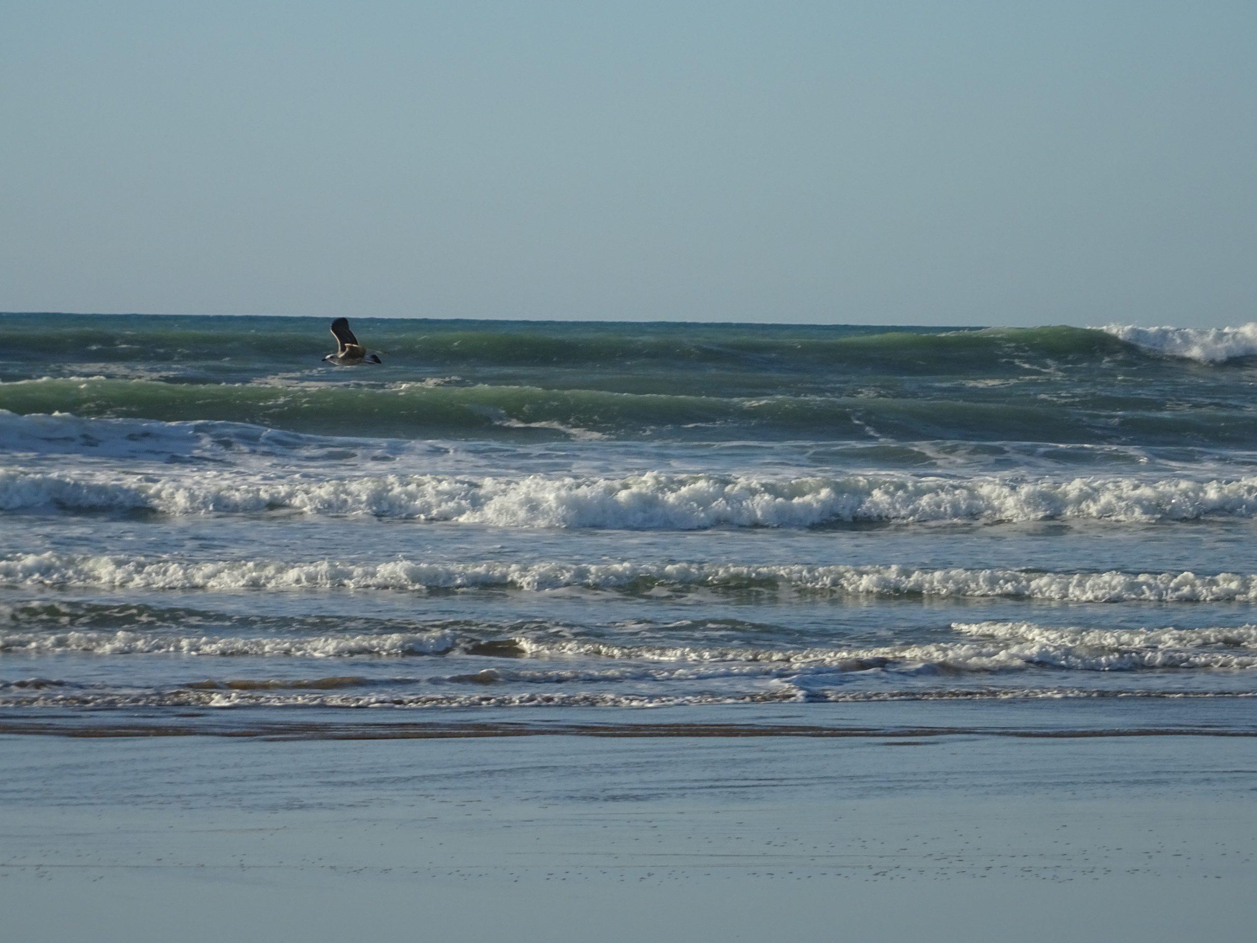 sea waves and one bird